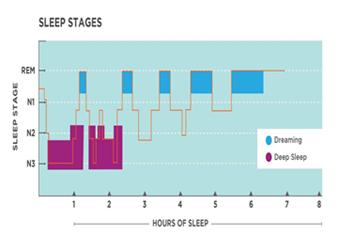 Active In Redbourn sleep stages